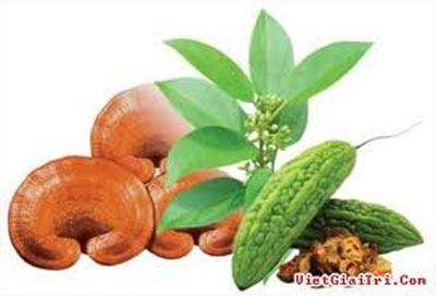 Các loại cây thuốc tốt cho bệnh Đường huyết