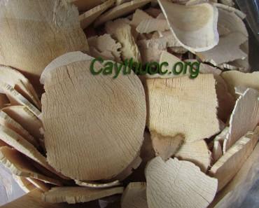 Hướng dẫn cách dùng rễ mật nhân sắc uống