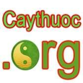 Caythuoc.org