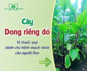cay-dong-rieng-do-chua-benh-tim-mach