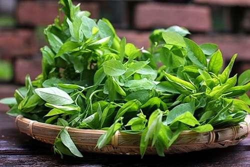 Cần cẩn trọng khi dùng cây rau ngót