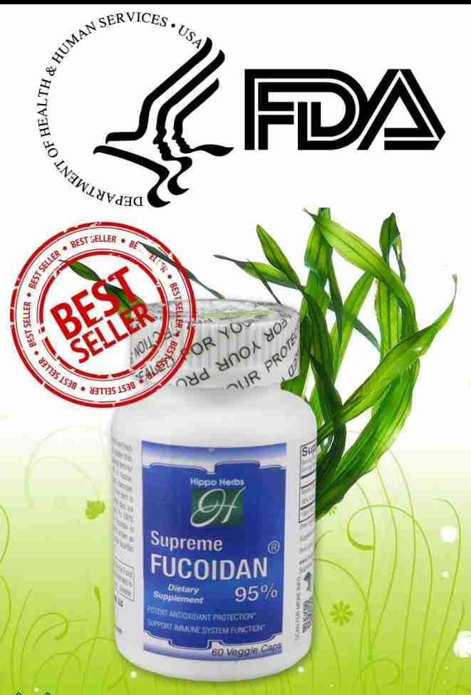 Fucoidan tảo nâu nhật bản