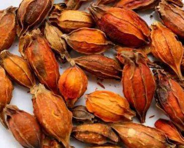 hạt dành dành khô