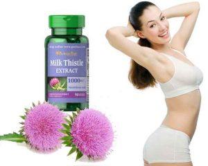 milk-thistle-bao-ve-gan cây kế sữa
