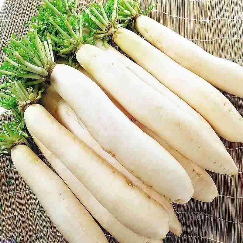 Củ cải trắng điều trị ho bằng cây thuốc nam