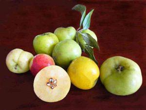 cách phân biệt táo mèo