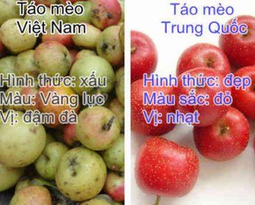 Cách phân biệt táo mèo Trung Quốc