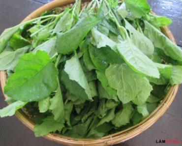 Nơi bán rau cải trời ở Tp. Hồ Chí Minh và Hà Nội