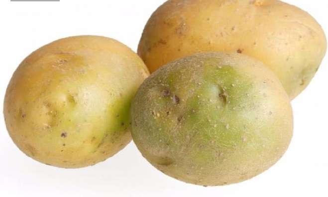 Củ khoai tây xanh