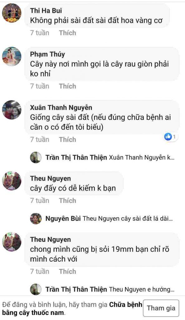 Bài viết về cây cúc đồng điều trị bệnh sỏi thận được lan truyền trên Facebook
