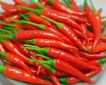 Công dụng của cây ớt
