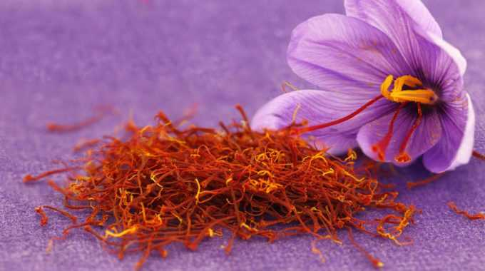 Nhụy hoa nghệ tây
