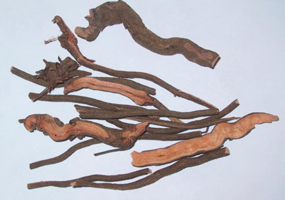 Rễ thiến thảo