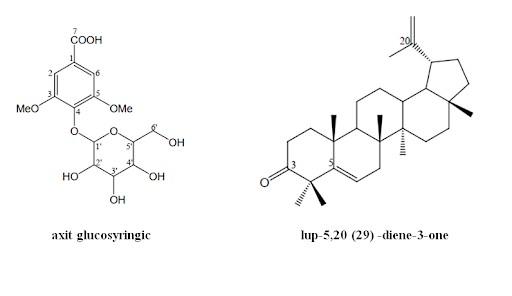 Cây xạ đen có tác dụng kháng RSV