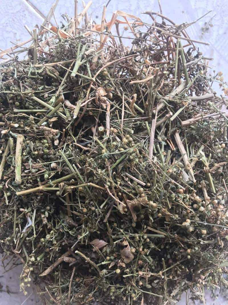 Cam thảo đất khô