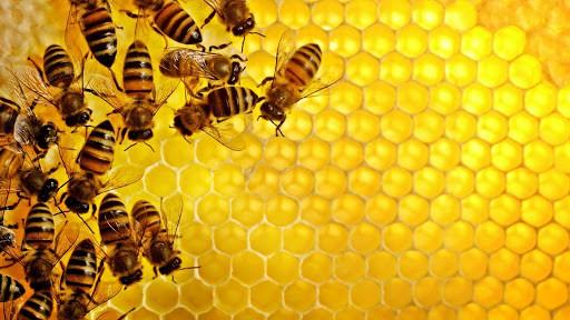 Sáp ong - vị thuốc dân gian