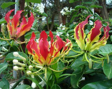 Hoa cây ngọt nghẹo