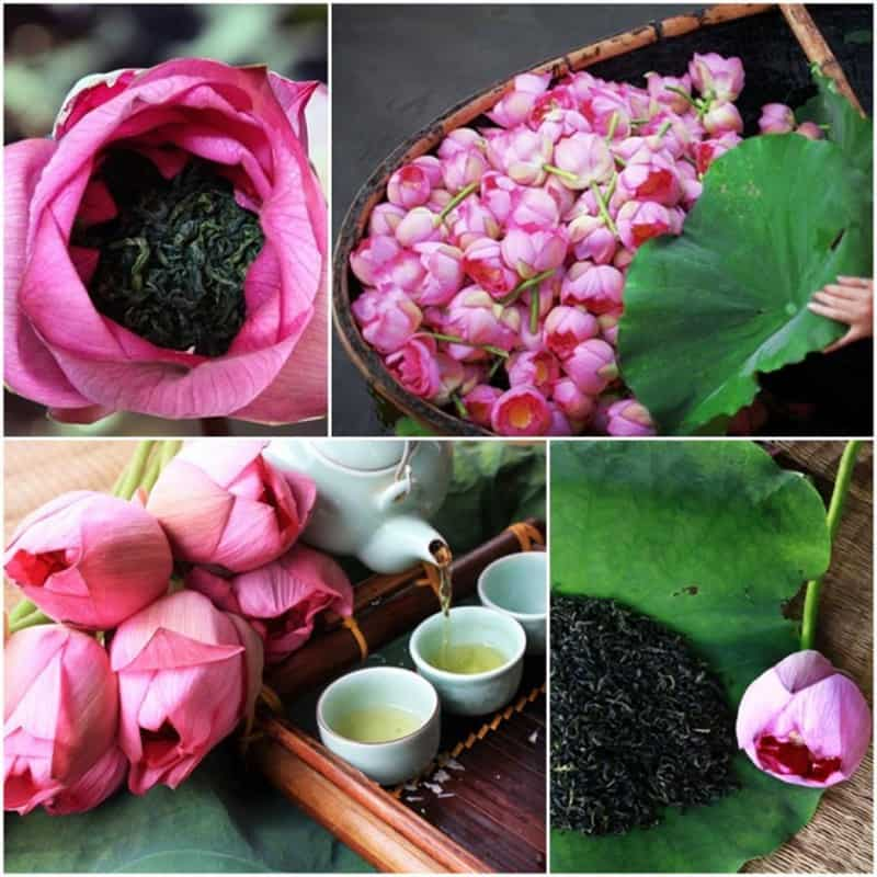 Hoa sen ướp trà