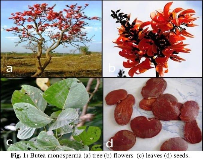 Cây, hoa, lá và hạt gièng gièng