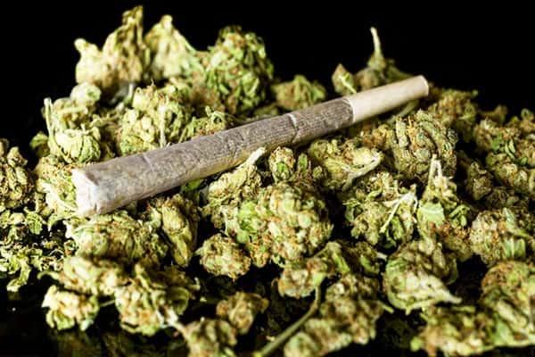 Hoa cần sa dùng làm điếu hút