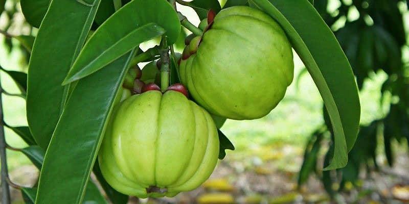 Trái bứa (loại vỏ có khía múi)