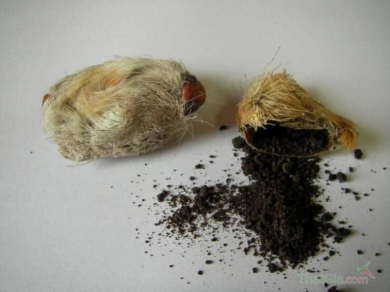 Công dụng của xạ hương