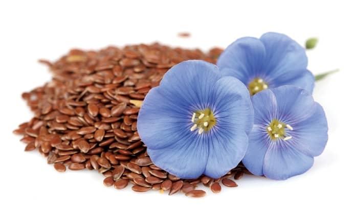 Hoa và hạt lanh